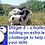 Thumbnail: Sheep needle felting kit -a choice of Herdwick, Jacob or Black Welsh Mountain