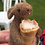 Thumbnail: Brown Hare Needle felting kit - adorable and great for beginners and improvers