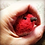 Thumbnail: Robin needle felting kit  -   great for nervous beginners