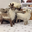 Thumbnail: Robin and Reindeer Christmas Special - Needle felting kits - Special Offer