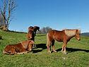 hest01.jpg