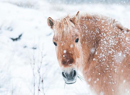 Vanninntak og kolikk hos hest