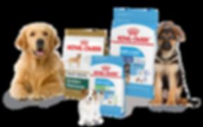 dyrebutikken-selector-dogs-4.png