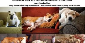 Concevoir la relation homme/ chien…différentes approches