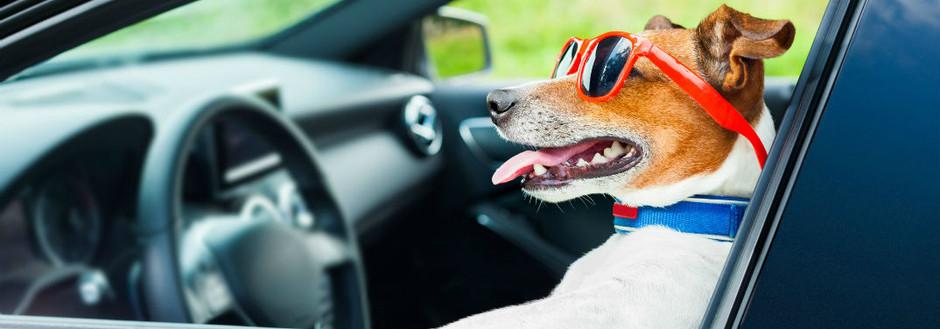 Cómo viajar en el coche con perros, gatos y otras mascotas.