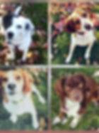 Kristin Mickelson dogs.jpg