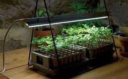 Grow-lights-plant-stand-LED-gardenista.j
