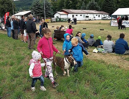 bulteriér a děti