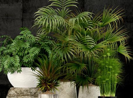 Ceotic Plant tree 01