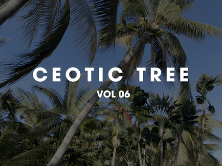CEOTIC STUDIO TREE VOL 6 _ Cây họ dừa p2