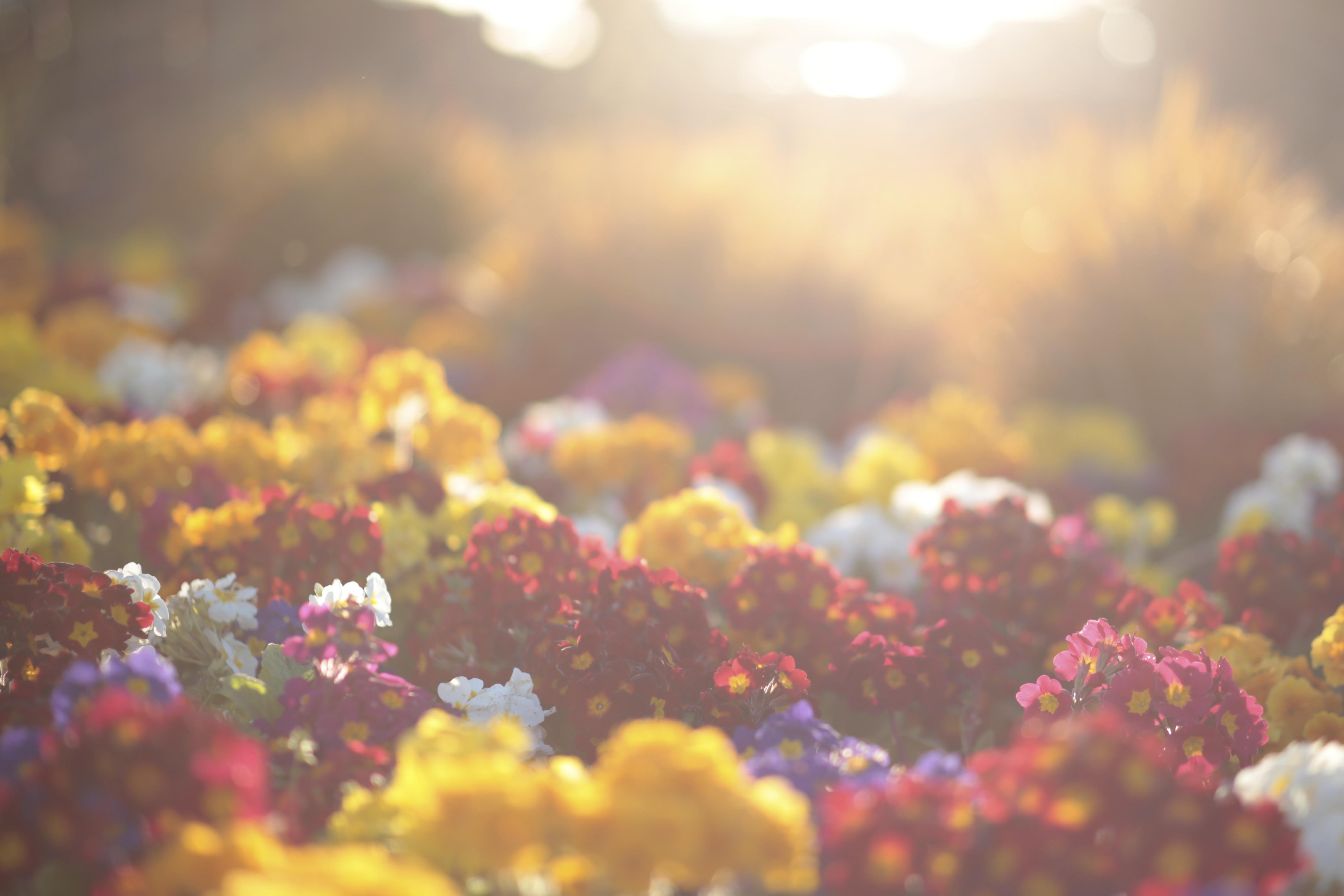 FLOWER BED II