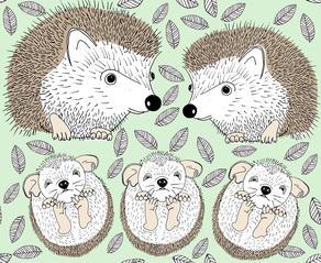 hedgehog families.jpg