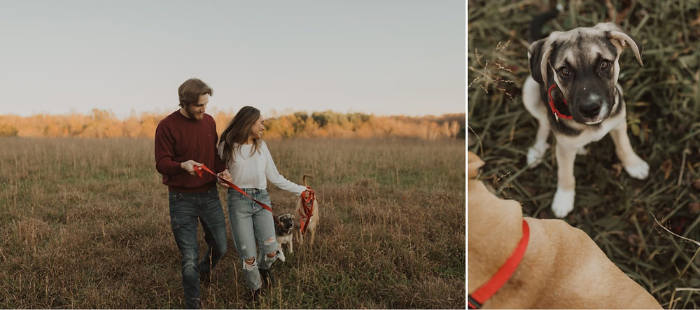 Middleburg Virginia engagement session dogs