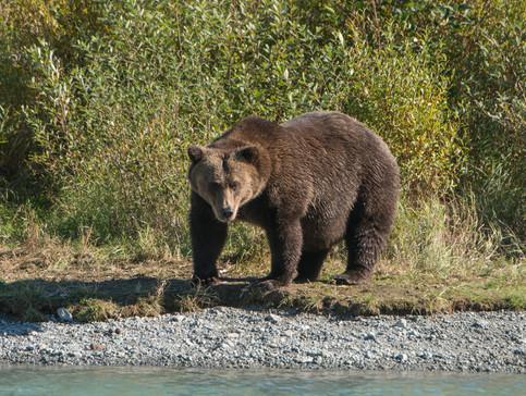 Медвепут или Здравствуйте Владимир Владимирович!