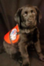 Puppy profile 2.JPG