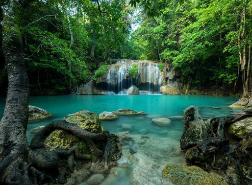 Thailand National Parks to Replenish in Absence of Buzzing Tourism.