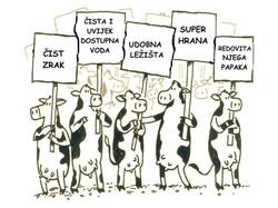 zahtjevi krava