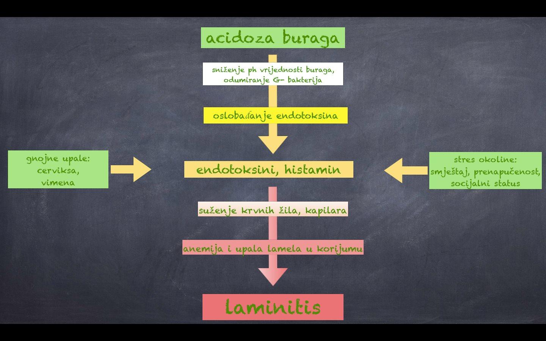 uzroci laminitisa