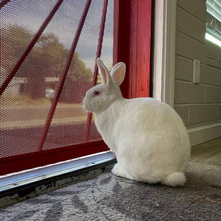 Vivir con un conejo doméstico