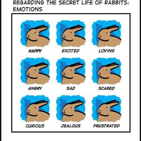 Cómo saber si tu conejo está enfermo