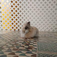 wallpaperflare.com_wallpaper.jpg
