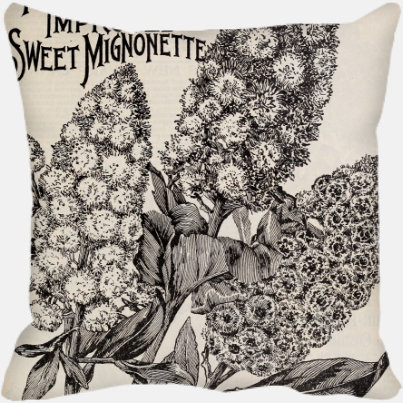 Sweet Mignonette