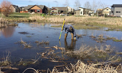 Cattail Clean Up 01 2017.jpg