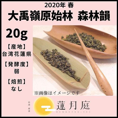 【2020年 春】大禹嶺原始林   森林韻   20g