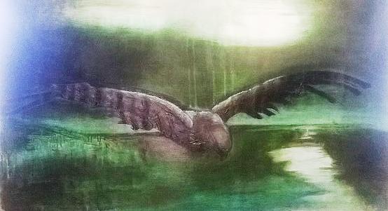 Oiseau Elvire