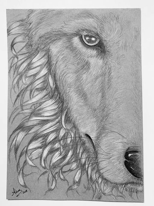 Loup Dessin Noir Blanc Gris