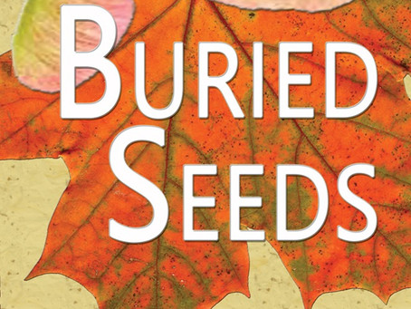 Buried Seeds Review