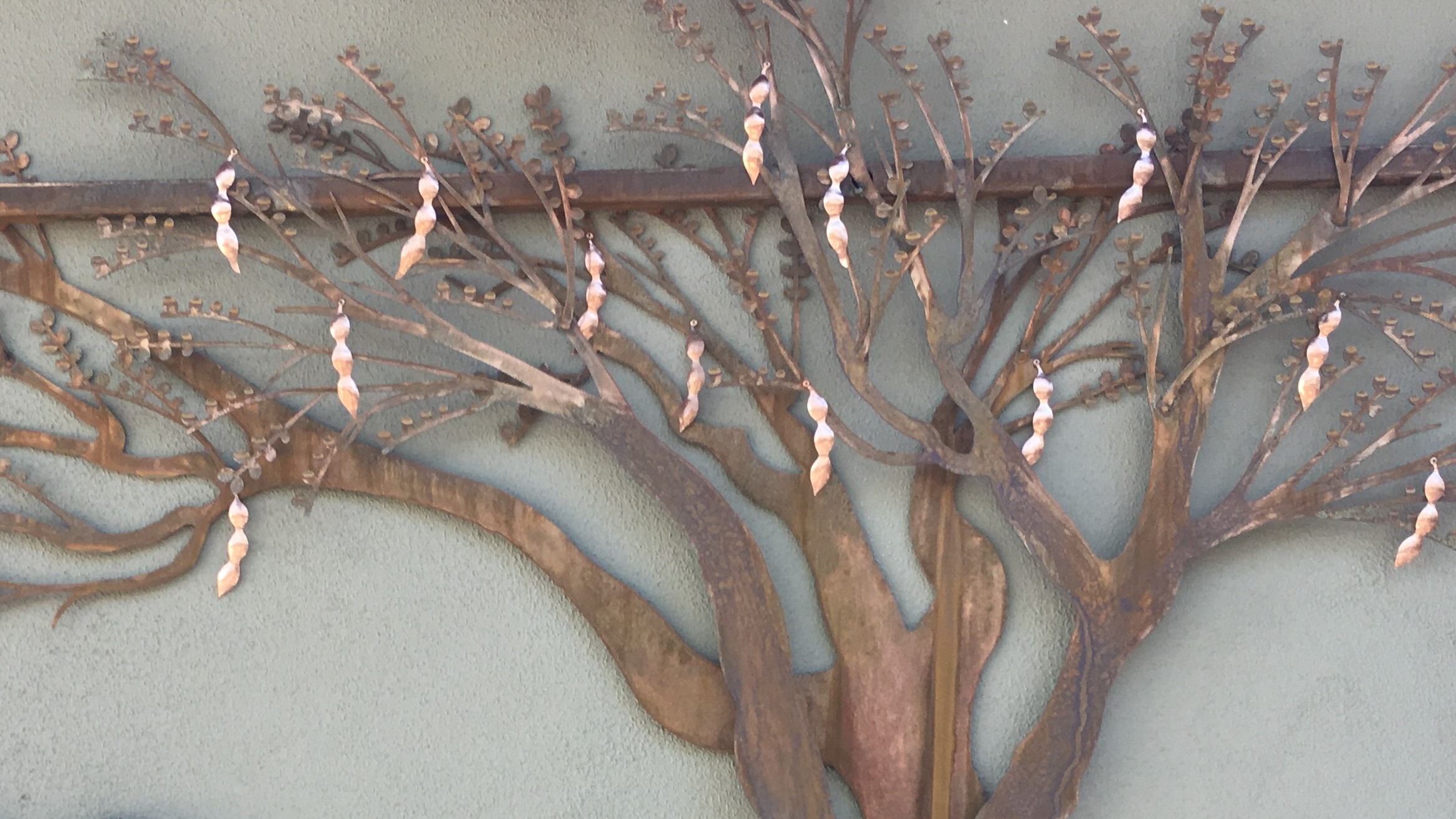 Tucson Botanical Garden - copper palo ve