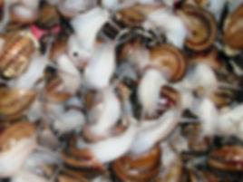 snail cosmetics