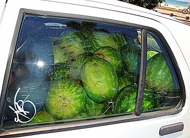 Check Out Those Melons