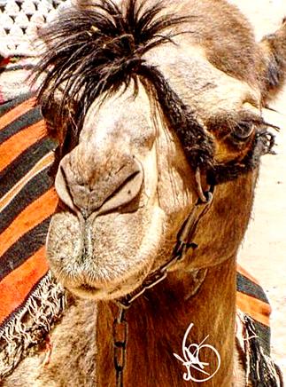 Formal Camel Optional