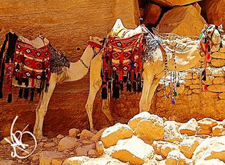 Camel Hides