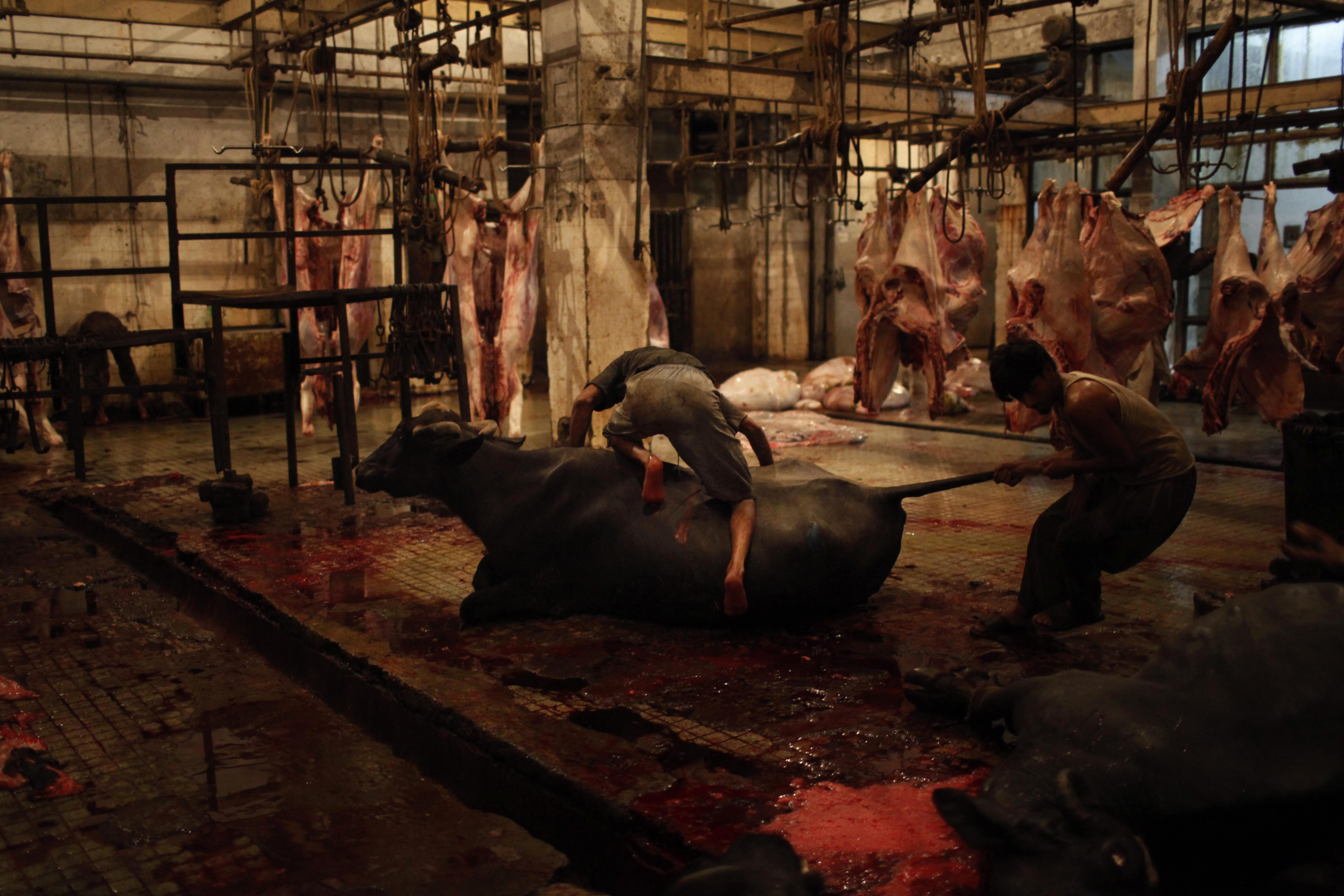 Pakistani Slaughterhouse
