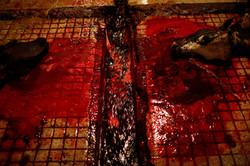 Pakistan Slaughterhouse