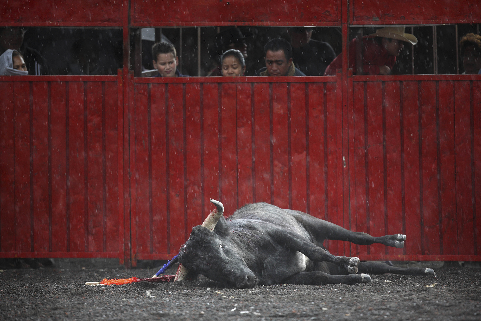 Mexico Bullfighting