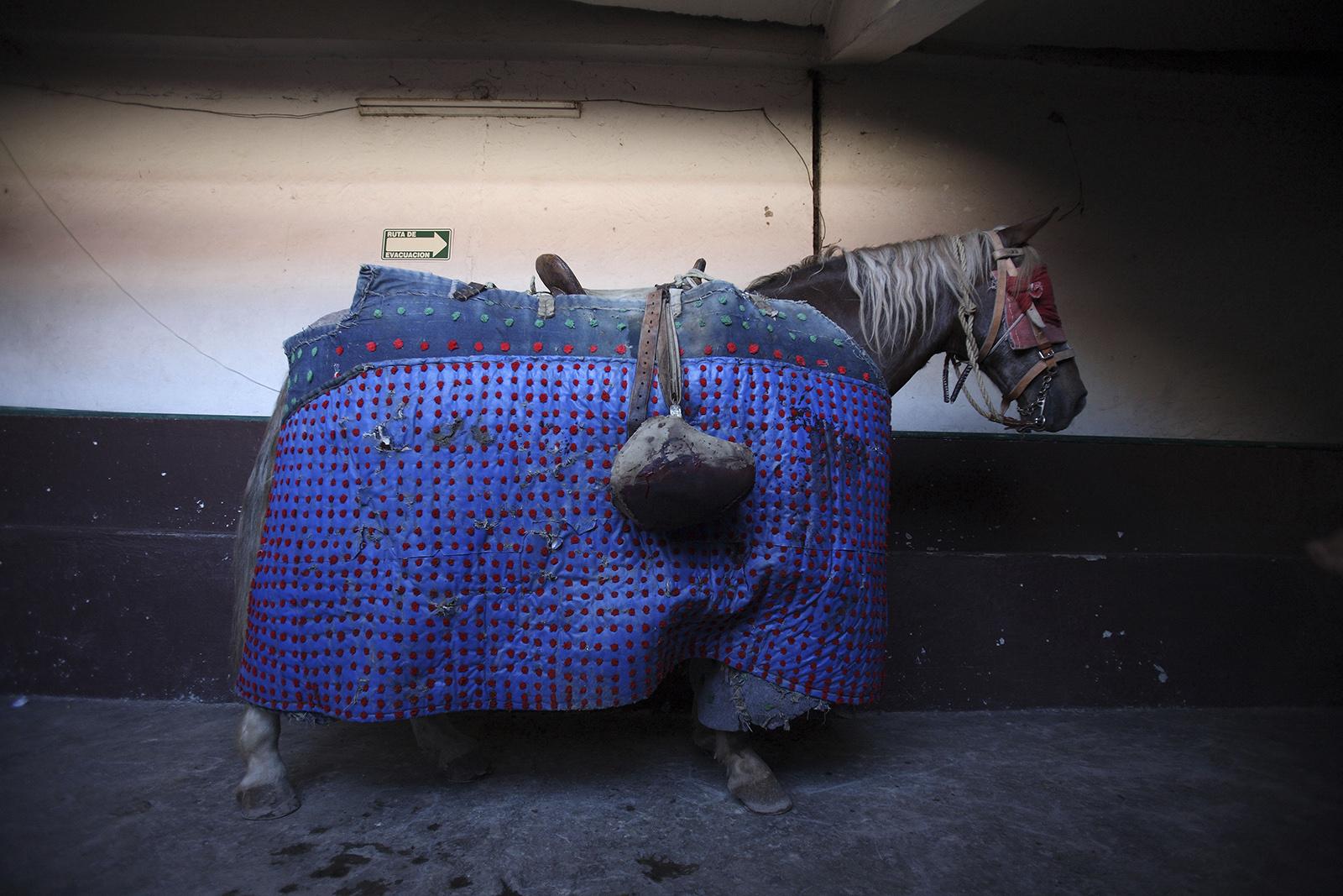 Mexico Bullfigthing