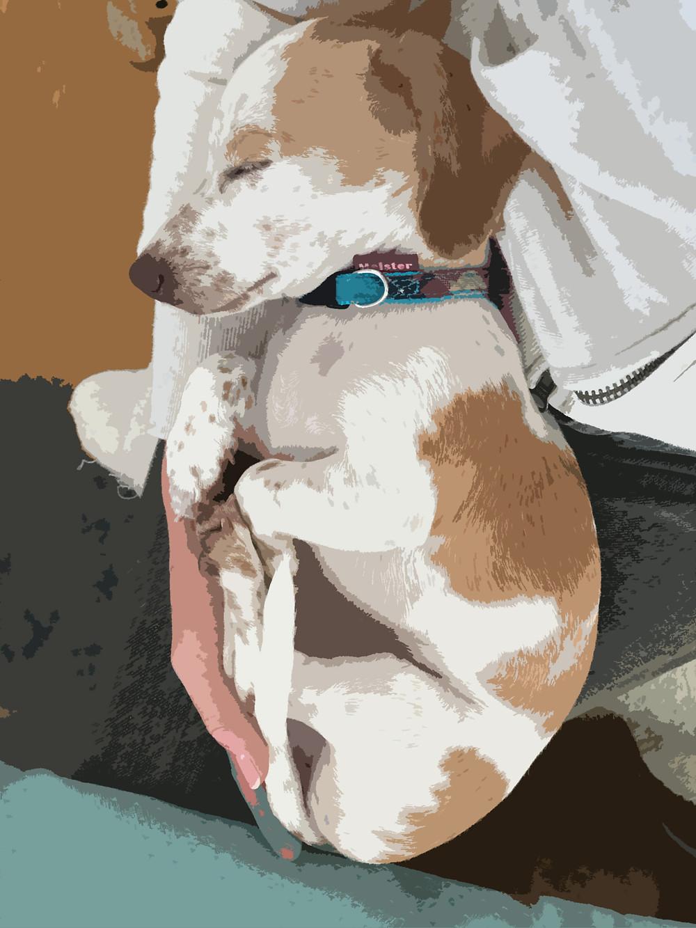 犬の虐待のストーリー