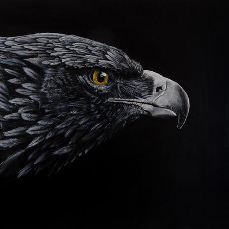 Regard d'un aigle
