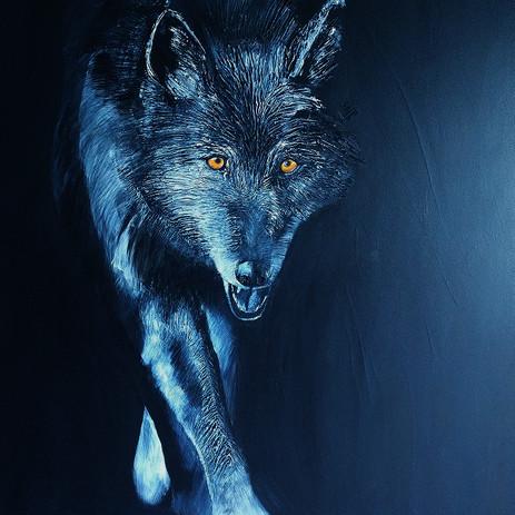 Regard d'un Loup
