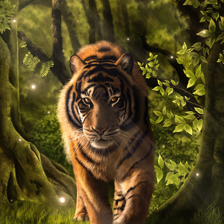 Forêt & Tigre