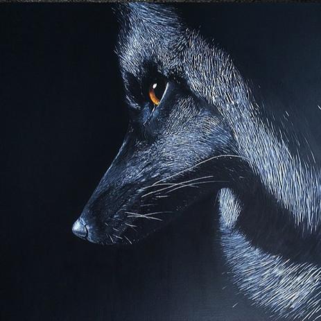 Regard d'un renard argenté