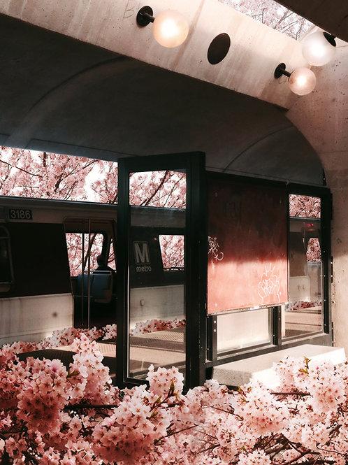 Blossoms 2021