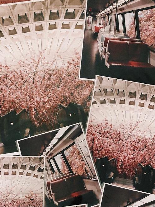 "8x10"" Cherry Blossom Bundle"