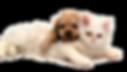 animais-taubate-veterinario-1.png