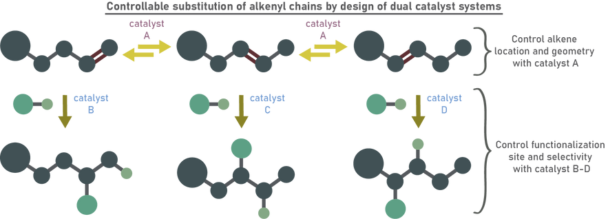 6 - Remote Functionalization and Dual Catal.png