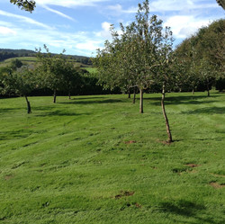 Apple orchard at Kenton Park Estate
